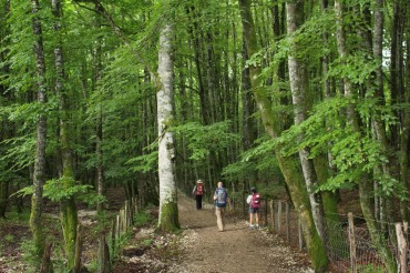 Day 2. Pilgrims Follow the Trail Just Outside Roncesvalles.