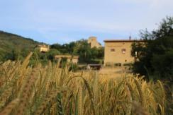 Morning Field Wheat