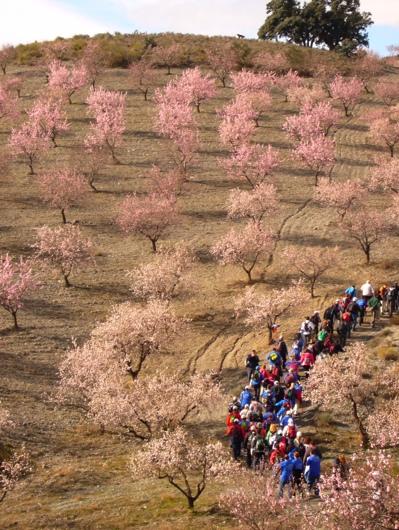 Almond Blossom Hike